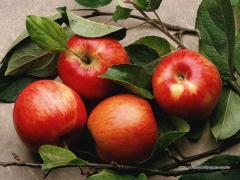 Яблоки сублимированные Сушеные яблоки