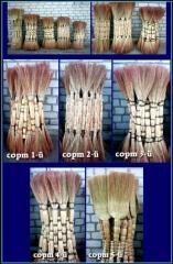 Sorghum brooms 5th grade
