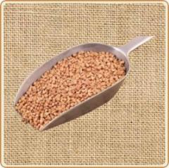 Complete krupotsekh on processing of buckwheat