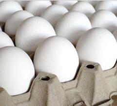 Яйца куриные столовые белые категория С1...