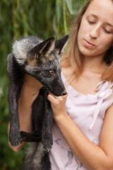 Seductive and obedient chanterelle the silver fox