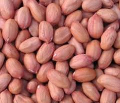Peanut of crude Bold 50/60