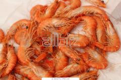 Shrimps chishchenny wholesale