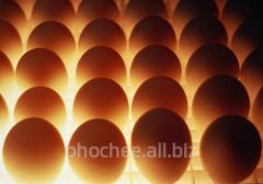 Яйца куриные столовые 1