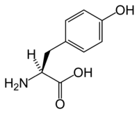 El aminoacido L-tirozin (L-Tyrosine)