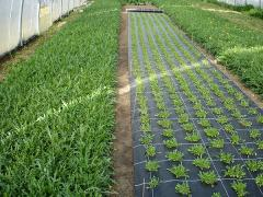 Agrofabric from the producer