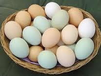 Jajka inkubacyjne