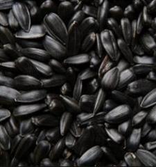 Зерно подсолнечника урожай 2015 г