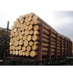 Pine round timber for wooden beams and rafters