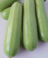 Alberelo di Sarzano's vegetable marrow 500gr