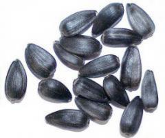 Зерно подсолнуха урожая 2015 г, экспорт