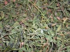 Herbs dried, Herbs dried wholesale, dried to
