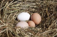 Яйцо домашней птицы Organic eggs