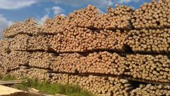 Rudstoyka a pine svezhepit from the producer