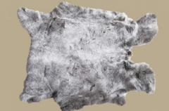 Skin of a rabbit, meat of a rabbi