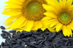 Sunflower of joint project company