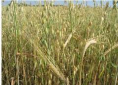 Зерновые продукты