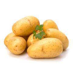 Potatoes of family Solanaceous