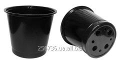 Pots for seedling of Don-Kwia