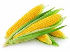 Кукуруза оптом с доставкой Украина