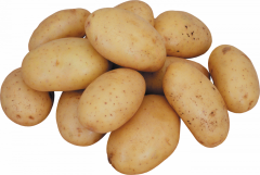 Potatoes of a grade of the Lady