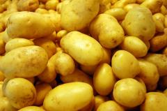 Картофель сорта Карлена