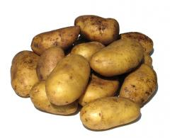 Potatoes of a grade of Melodie