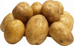 Potatoes of a grade of Rocc