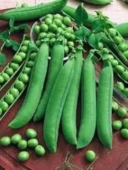 Seeds of Alpha peas