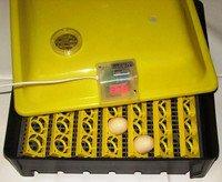 Инкубатор бытовой автоматический  ASEL  56 куриных