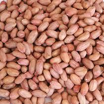 Peanut crude, Blanch. 38/42, 40/50, 50/60 mm