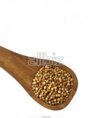 Ambercane for expor