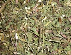 Эхинацея - трава