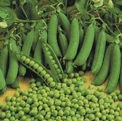 Cultivos forrajeros de haba