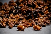 Sea-buckthorn dried. Sea-buckthorn dried from the