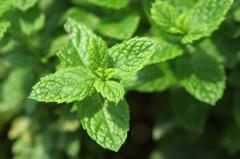 Mint natural