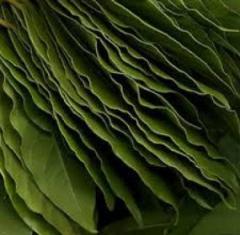 Bay leaf whole Georgia
