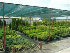 Декоративные растения продажа, опт Киев,Кременчуг,