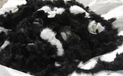 Scraps of fur of a rabbi