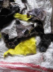 Scraps of fur of a nutria