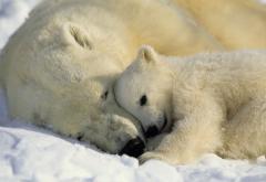 Фотообои Komar National Geographic 1-605