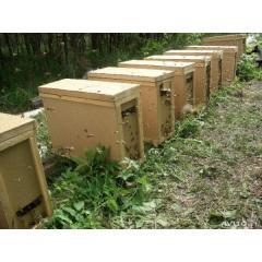 Пчелопакет 4 рамочный