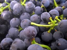 koncentrirovannyj_sok_krasnogo_vinograda_65