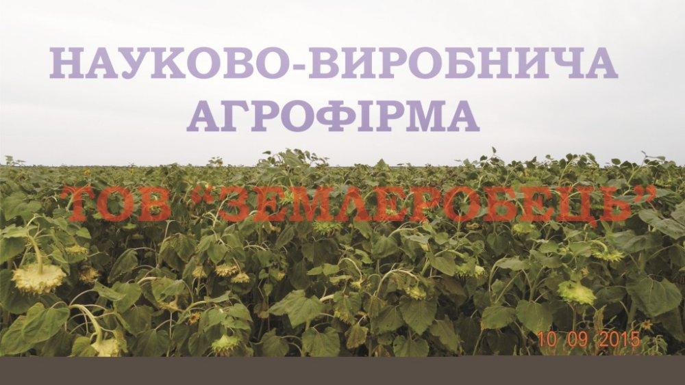 semena_podsolnechnika_sort_donskoj_60