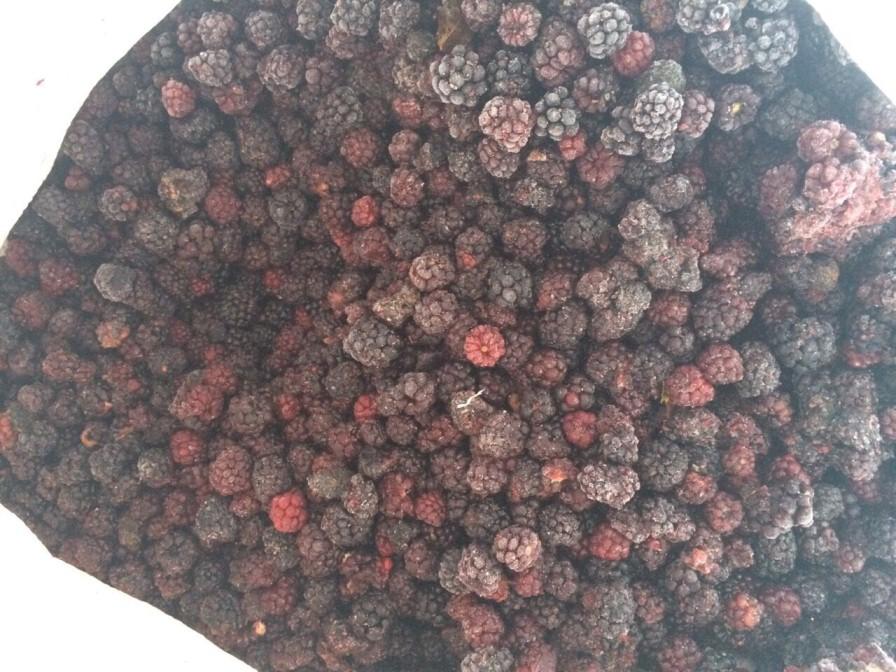 ezhevika_zamorozhennaya_frozen_wild_blackberry