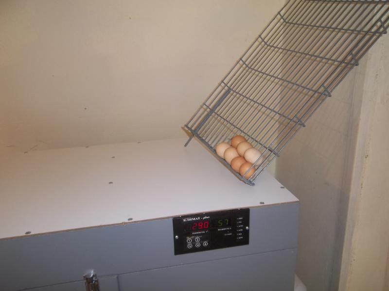 inkubator_bytovoj_na_3_lotka