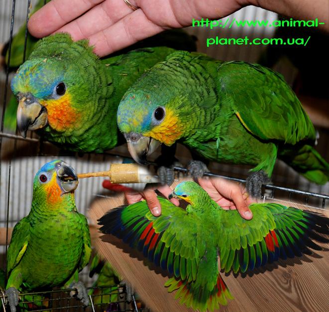 Игры для девочек о про попугаев
