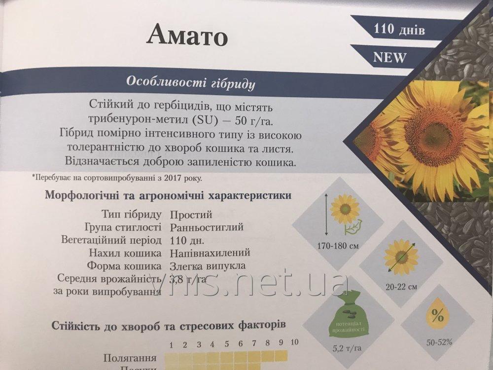 podsolnechnik_amato_pod_50gr_granstara_ot_vnis
