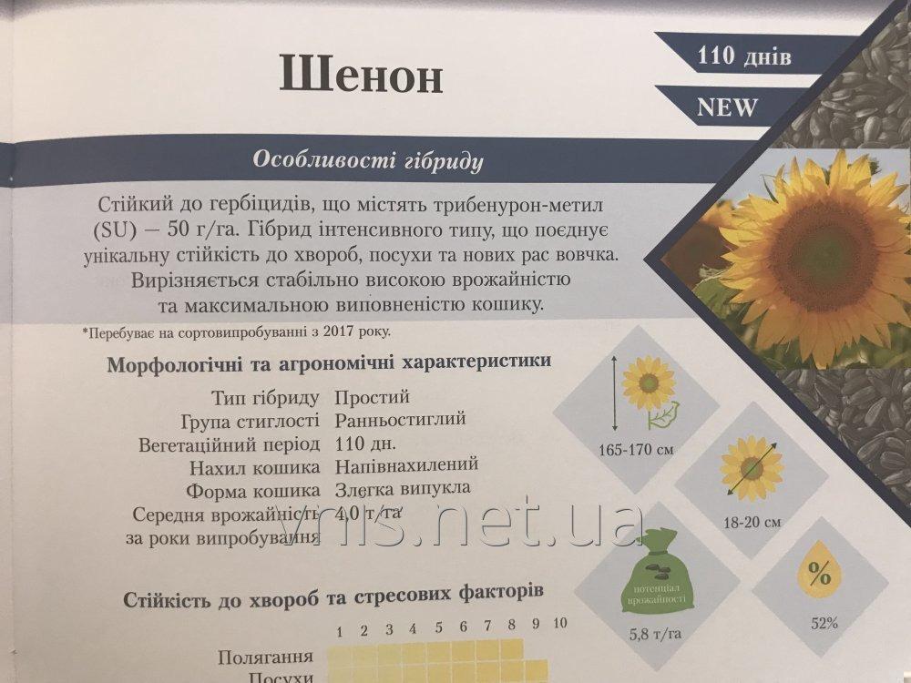 podsolnechnik-shenon-ustojchivyj-ko-vsem-rasam