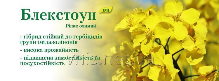 semena_rapsa_ozimogo_blekstoun_imi